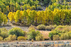 Beginning of Fall, eastern Sierra's