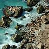 Seals on rocks, Big Sur, CA