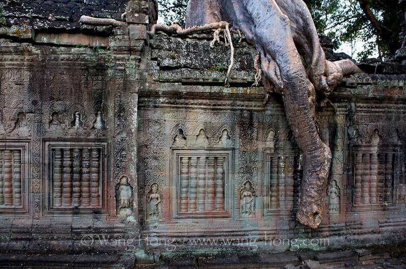 Preah Khan: tree trunk, wall and apsaras
