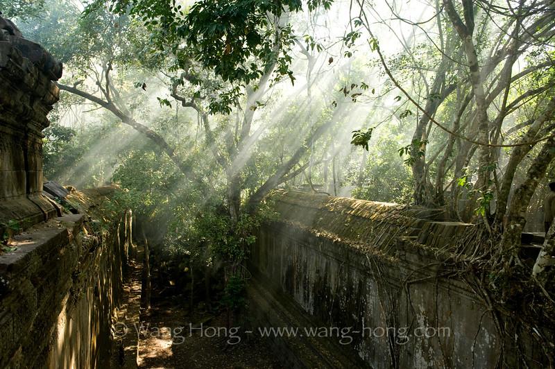 Sun shines through jungles at Beng Mealea.
