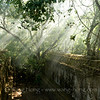 Sun shines through jungles at Beng Mealea.