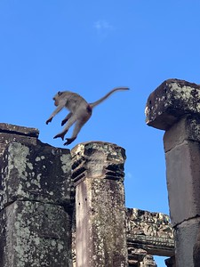 Gonna make it monkey