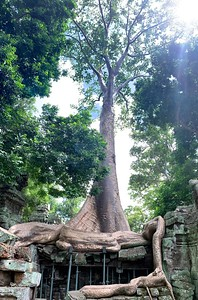 Snake-like roots at Ta Prohm
