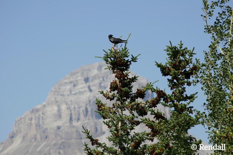 Crowsnest Mountain, Alberta