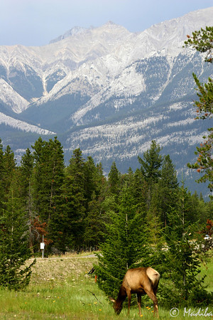 Jasper scenery