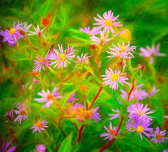 Flowers Gros Morne Newfoundland Copyright 2021 Steve Leimberg UnSeenImages Com _U0A0251 copy