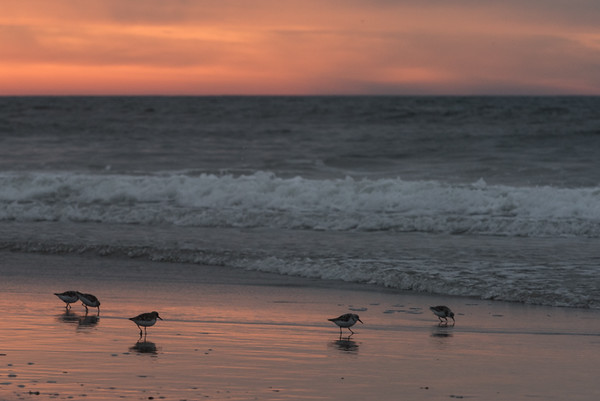 Avalon Beach at Sunrise
