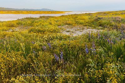 Waking Up in the Flowers - Carrizo Plain National Monument