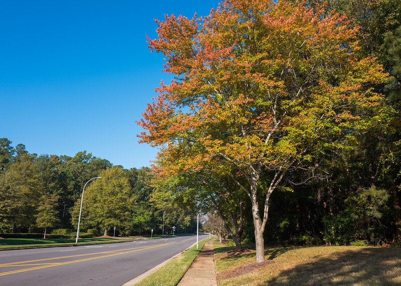 Autumn in Cary, NC