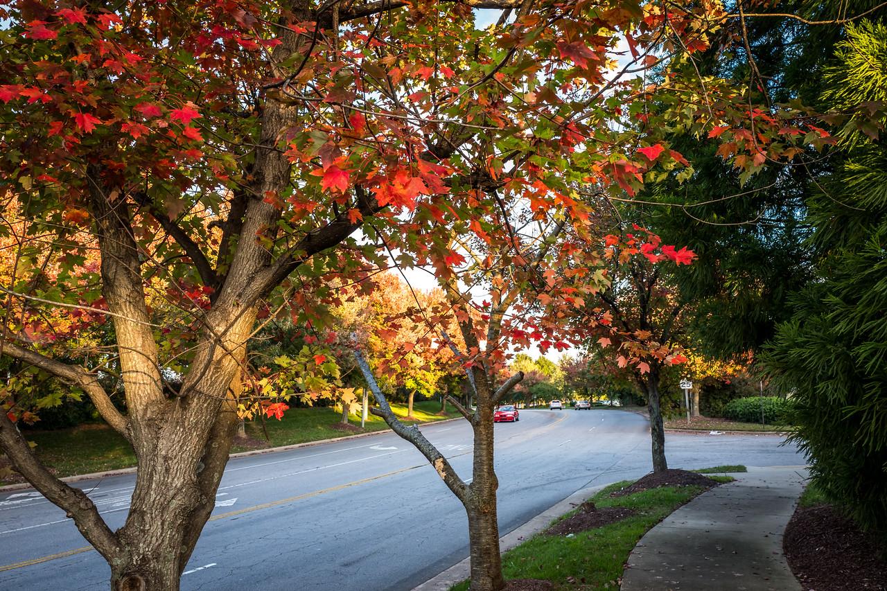 Random trees in Cary, NC
