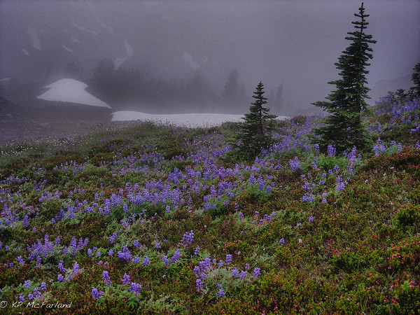 Alpine Meadow Morning Fog