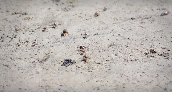tiny crabs!