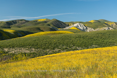 Temblor Hills during Super Bloom