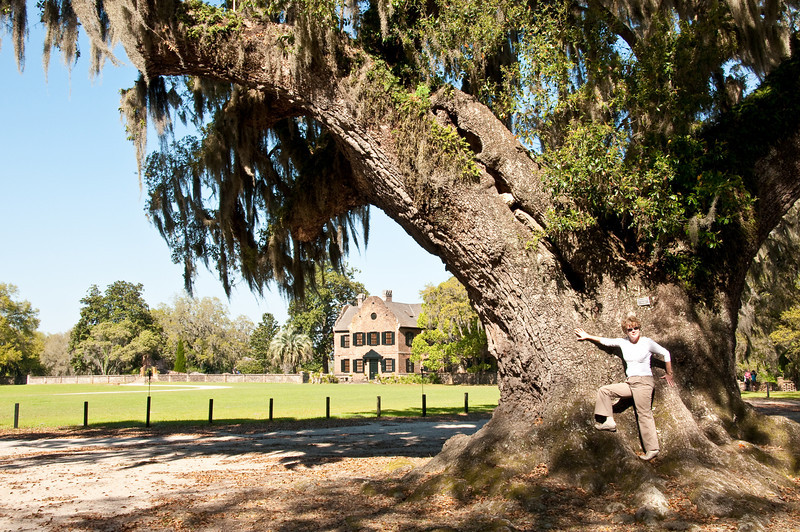 Live Oak, Middleton Place