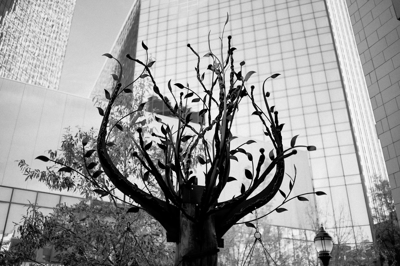 Epicentre Tree