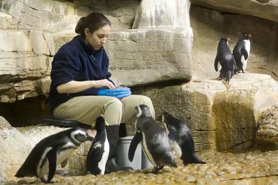 Penguin VII