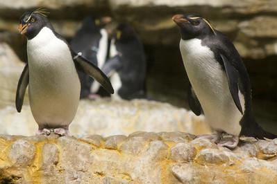 Penguin III