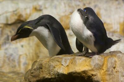Penguin V