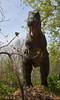 dinosaur IMG_6530