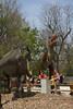 dinosaur IMG_6525