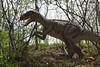 dinosaur IMG_6505