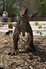 dinosaur IMG_6532
