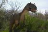 dinosaur IMG_6527