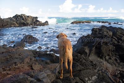 Rapa_Nui-Isla_de_Pascua-Easter_Island-109