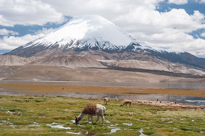 Scenery, Lauca National Park, Chile 20 January 2007