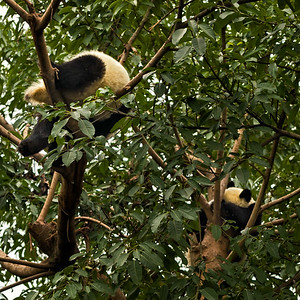 Panda Research Center