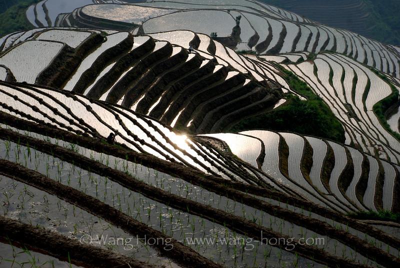 Dazhai rice terraces.