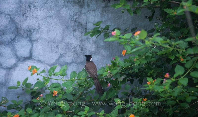 Bird singing outside my kitchen windows.
