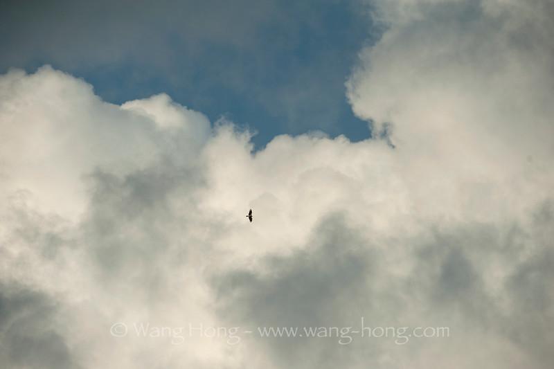 Kite flying through clouds over Yung Shue Wan. 南丫岛榕树湾上空,苍鹰飞过云层。