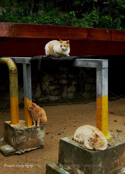 Lamma is a cats' paradise