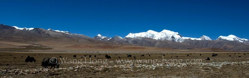 Nyenchen Tanglha Mountains, Yaks, and Qinghai-Tibet Railway