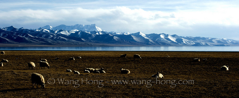 Namtso Lake (4718m) and Nyenchen Tanglha Mountains at sunset in early April.