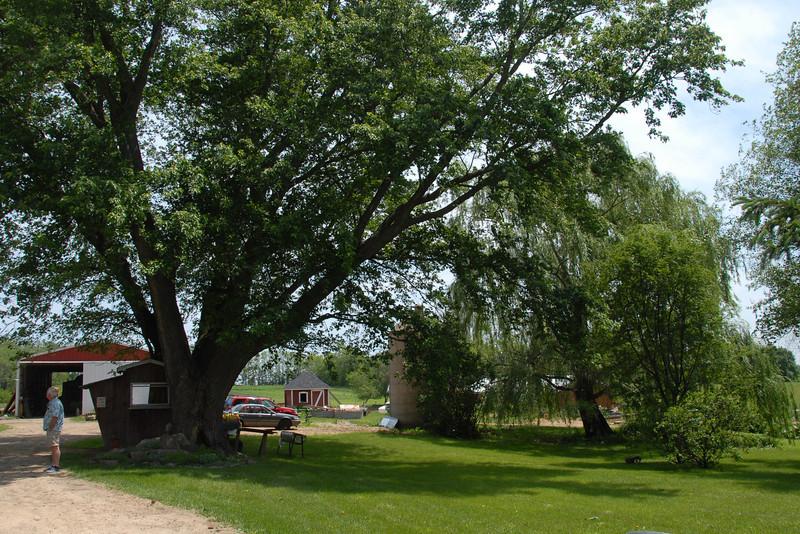 Amazing Grace Family Farm.