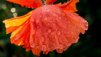 Orange and wet.