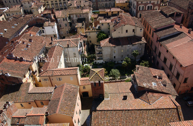Lucca - View from top of Torre Guinigi