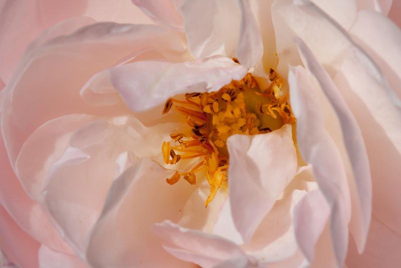 September visit to the rose garden.