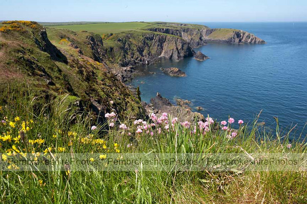 Coast path between Trevine and Porthgain.
