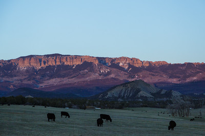 Cows and Alpenglow