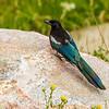 2016_7_18 Colorado Rocky Mountain National Park-2542