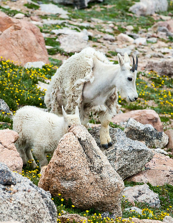 2016_7_15 Colorado Mt  Evans-1959