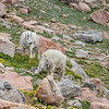 2016_7_15 Colorado Mt  Evans-1954