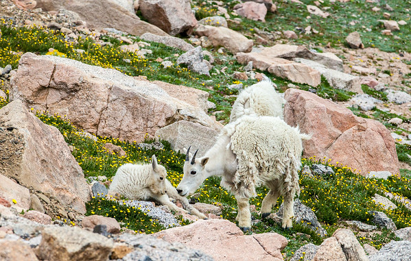 2016_7_15 Colorado Mt  Evans-1957