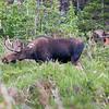 2016_7_17 Brainard State Park-9962