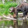 2016_7_17 Brainard State Park-9785