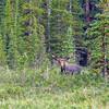 2016_7_17 Brainard State Park-9869