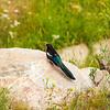 2016_7_18 Colorado Rocky Mountain National Park-2546